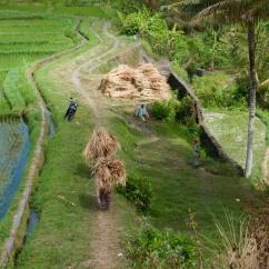 Travail dans les champs, Bali