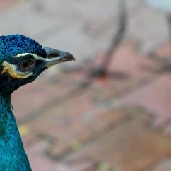 Birds Park, Kuala Lumpur