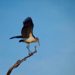 Uda Walawe National Park