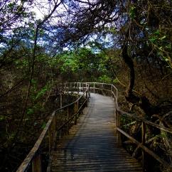 Isabela, Galapagos