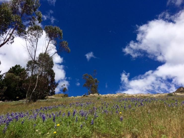 Mais c'est les même fleurs que chez nous! A 3800 m.