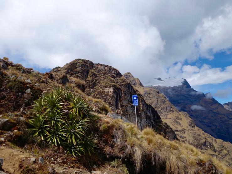 4150 mètres et des palmiers-cactus...
