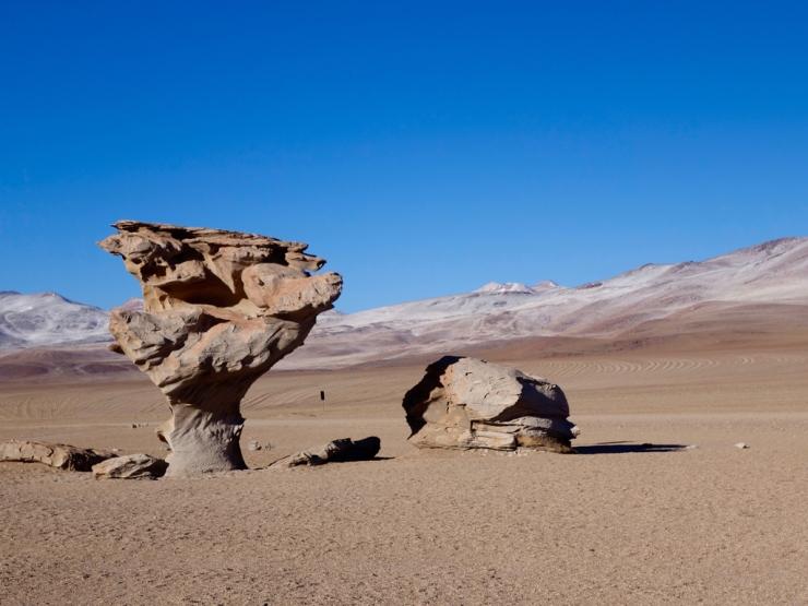 L'arbre du désert