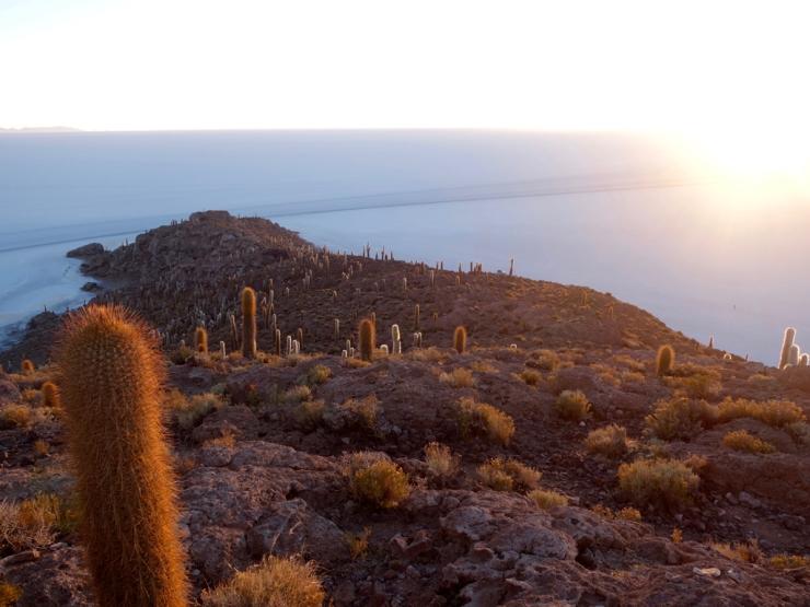 Les cactus aussi regardent le soleil se lever