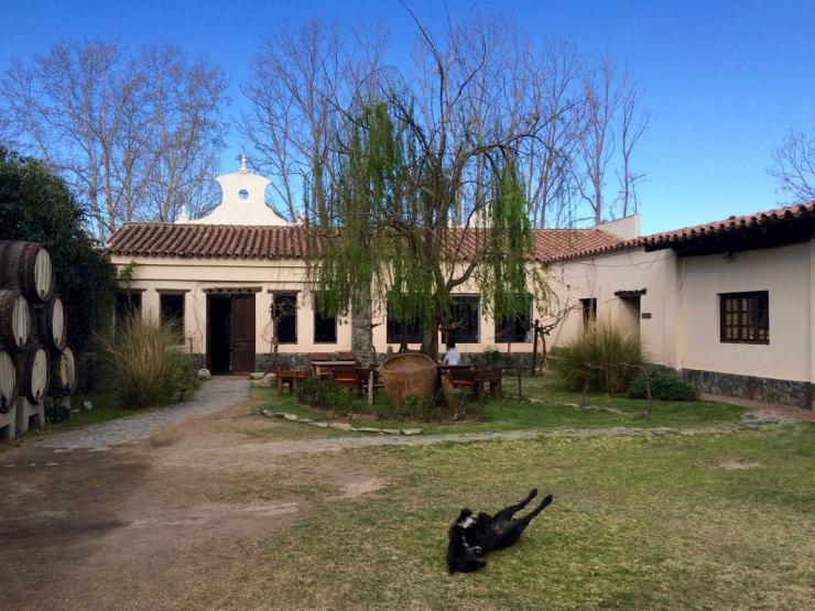 Le chien qui a adopté le jardin de la bodega