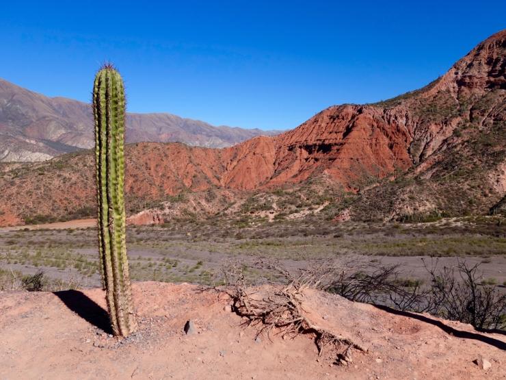 Cactus veillant sur son royaume