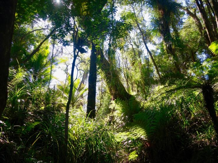 Rainforest à la néo-zélandaise