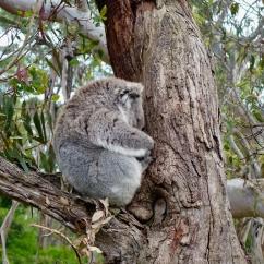 pb_Photos_Australie_ - 27